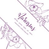 Sketch linear narcissus blossom. Stock Image