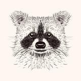 Sketch liner raccoon. Hand drawn vector  illustration in doodle Stock Photos