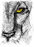 Sketch of a lion. Hand drawn Sketch of a lion looking intently at the camera. Vector illustration Stock Photography