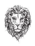 Sketch lion head Royalty Free Stock Photo