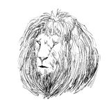 Sketch lion head Royalty Free Stock Image