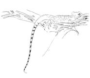 Sketch of a lizard Royalty Free Stock Photo