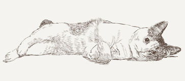 Sketch of a lying cat. Vector drawing of a lying domestic cat vector illustration