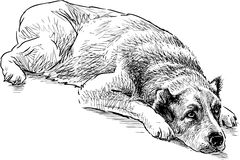 Sketch of a lying dog Stock Photos