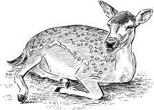 Sketch of a lying roe deer. Vector drawing of a young forest deer Stock Image