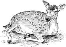Sketch of a lying roe deer Stock Image