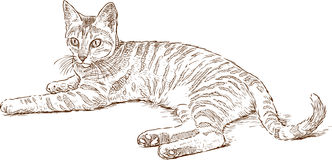 Sketch of a lying striped cat Royalty Free Stock Photos
