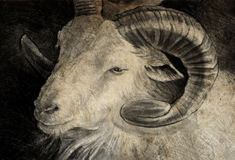 Sketch made with digital tablet of goat head with big horns Stock Photography
