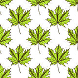 Sketch maple leaves in vintage style. Vector seamless pattern Royalty Free Stock Photo