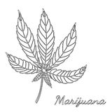 Sketch of marijuana isolated on white background. Royalty Free Stock Photography