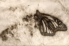Sketch of Monarch Butterfly Resting on a Dried Desert Flower. Sketch of Monarch Butterfly Resting Quietly on a Dried Desert Flower stock illustration