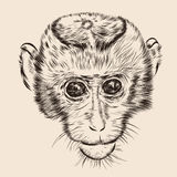 Sketch monkey face. Hand drawn doodle vector Stock Photography