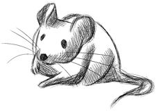Sketch of a Mouse in black and white isolated stock illustration