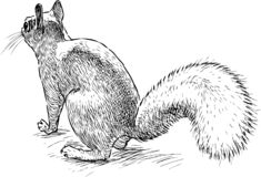 A sketch of a nimble forest squirrel stock illustration