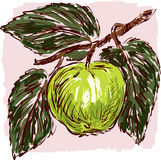 Sketch Of A Green Apple Royalty Free Stock Photo