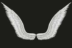 Sketch open white angel wings. Vector. Illustration isolated on black background Royalty Free Illustration