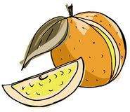 Sketch of an Orange fruit  Royalty Free Stock Images