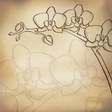 Sketch  orchid background Stock Photography