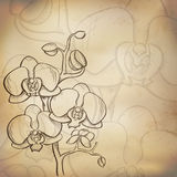 Sketch  orchid background Stock Photo