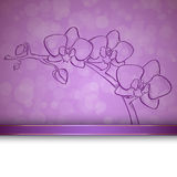 Sketch  orchid background Royalty Free Stock Image