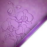 Sketch  orchid background Royalty Free Stock Photo