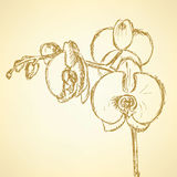 Sketch orchid, vector vintage background Royalty Free Stock Photo