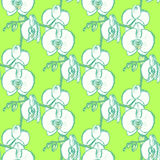 Sketch orchid, vector vintage seamless pattern Royalty Free Stock Photo