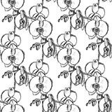Sketch orchid, vector vintage seamless pattern Royalty Free Stock Image