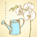 Sketch orchid and watering can, vector  background Royalty Free Stock Photos