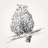 Sketch of owl Stock Photography