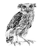 Sketch of owl. isolated on white Stock Photos