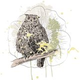 Sketch of a owl Stock Photo