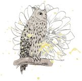 Sketch of a owl Royalty Free Stock Photography