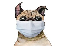 Sketch painted in watercolor: pug dog wearing protective face mask corona virus, coronavirus on a white isolated