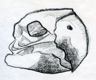 Sketch of a parrot scull Royalty Free Stock Photography