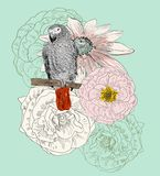 Sketch of a parrot Stock Images