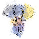 Sketch by pen African elephant front view on the background. Sketch by pen African elephant front view against the background of watercolor stains Stock Photography