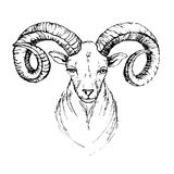 Sketch by pen head of a mountain goat Stock Photography