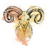 Sketch by pen of a mountain goat  head  on a colored background. Sketch by pen of a mountain goat  head  on a background of colored watercolor stains Stock Photo