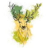 Sketch by pen Noble deer front view on the background. Of watercolor texture Stock Photography