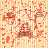 Sketch pig with mustache, vector background Stock Photography