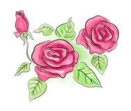 Sketch of pink roses in transparent colors Royalty Free Stock Image