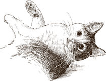 Sketch of playful cat Stock Images