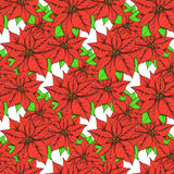 Sketch poinsettia Royalty Free Stock Image