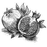 Sketch with pomegranates Royalty Free Stock Photos