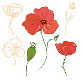 Sketch of poppy flower Royalty Free Stock Photography