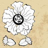 Sketch of poppy flower, vector Royalty Free Stock Images