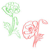 Sketch of poppy flowers Royalty Free Stock Photos