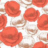 Sketch poppy,  vintage seamless pattern Stock Images