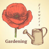 Sketch poppy and watering can, vector  background Stock Images